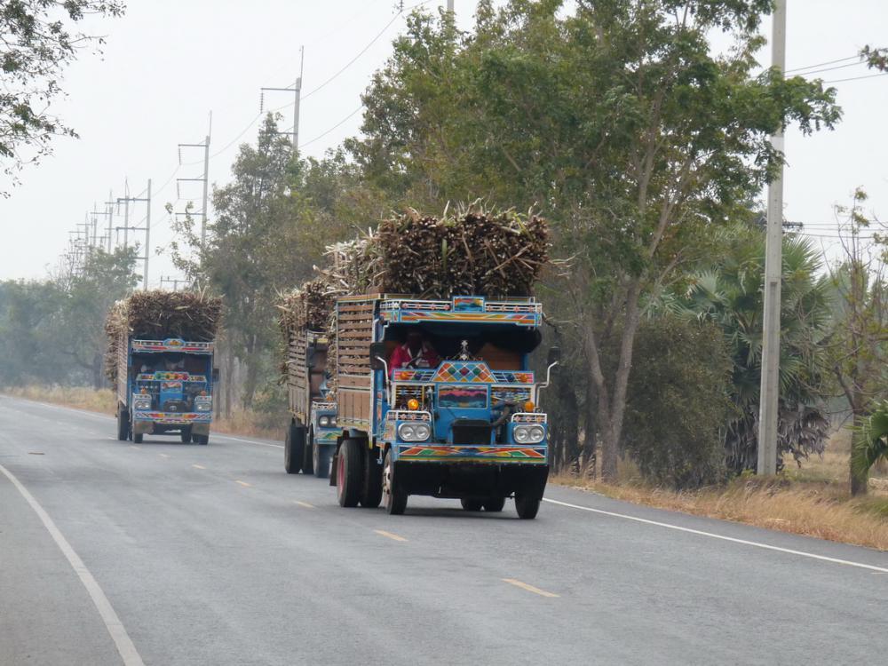 Cukornád szállítás