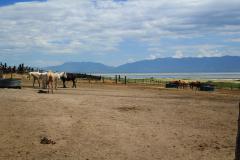 Farm a Nagy-Sós-tó Antelope-szigetén
