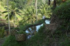 Balin rizsteraszok
