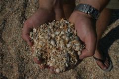 Kagylókavics (Azovi-tenger)