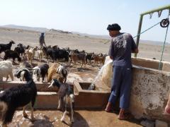 Erfoud fele állatitatás a sivatagban