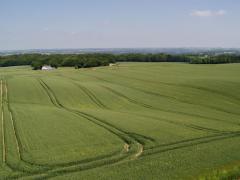 Morénasáncokon mezőgazdasági elegyengetés (Dánia)