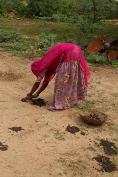 Bishnoi falvakban a trágya fontos kelléke a főzésnek