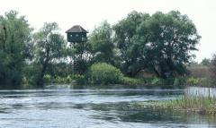 Duna mellékága (Duna-delta)
