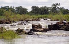 Zúgók az erdős szavannán (Angola)
