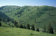 Erdőirtás (Gyimes, Románia)