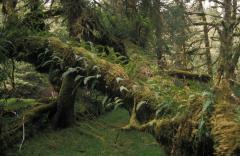 Mérsékelt övezeti esőerdő (Kanada)