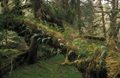 Mérsékelt övezeti esőerdők (Csendes-óceán partvidéke, Kanada)