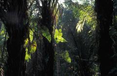 Esőerdő (Dél-Amerika)