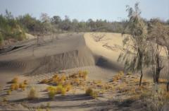 Sivatag (Kara-kum, Türkmenisztán)
