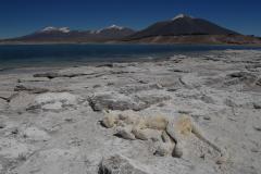 Sós tó (Száraz-Andok, Chile)