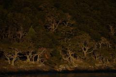 Óceáni esőerdő (Tűzföld)