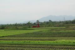 A Vörös-folyó alföldje. Sírok a rizsföldön.