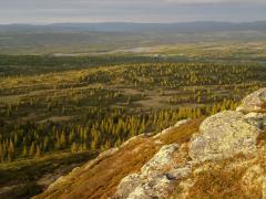 Tajga-tundra határ (Norvégia)