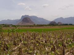 Mezőgazdasági művelésben vonás