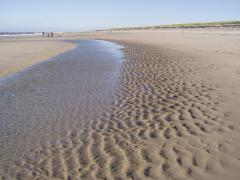 Texel-sziget (Hollandia)