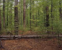 Lombhullató erdő