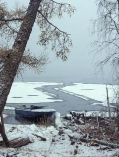 Tajga (Szibéria)