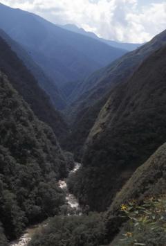 Hegyi esőerdő (Andok, Bolívia)