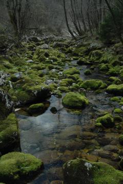 Karsztforrás környéke (Szlovénia)