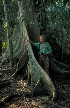 Esőerdő (Amazonas-medence)